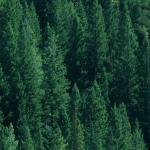 univers nature, produit naturels et plantes